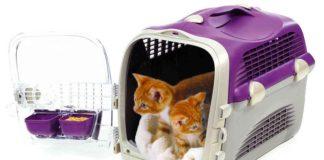 Transporter dla kota