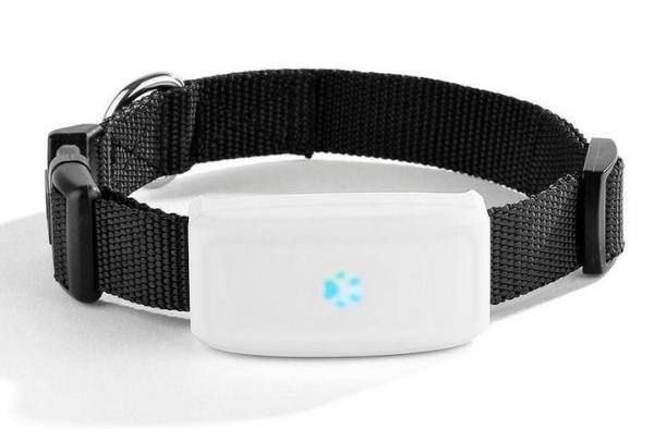 Lokalizator GPS dla psa